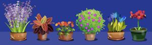 floresbonus